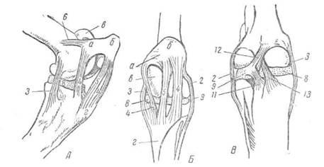 Коленный сустав животного артроскопическая операция на коленном суставе